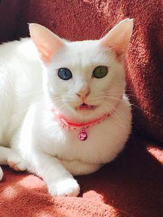 Kittens Cutest, Cats And Kittens, Kitty, Animals, Gatos, Cats, Little Kitty, Animales, Animaux