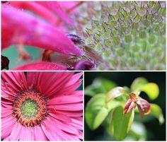 pinky\beautiful moments
