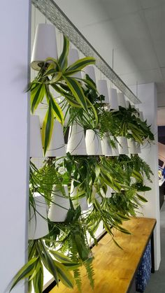 Whether You Need Foliage For A Short Term Event Or To Decorate The Office,  There. Indoor PlantsThe ...