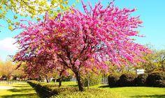 ¿Quién no pagaría por tener un paradisíaco jardín en casa? Normalmente nos asustamos a la hora de elegir árboles para exteriores. Solemos pensar que cuentan con muchísimo trabajo de mantenimiento, pero lo cierto es que no siempre es así. Descubre cómo puedes plantar y cuidar tu árbol del amor.