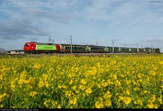 RailPictures.Net Photo: 5604 Caminhos de Ferro Portugueses Siemens at Aveiro, Portugal by Pedro Sabino