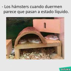Hamsters en estado líquido