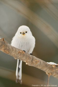 Really Cute Birds - Bing Images All Birds, Cute Birds, Pretty Birds, Little Birds, Beautiful Birds, Animals Beautiful, Amor Animal, Mundo Animal, Exotic Birds