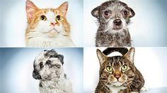 22 adorable animals up for adoption