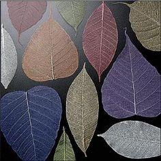 Skeletonized leaves 3 methods