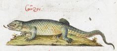 Lizard. 2nd quarter of the 16th century-3rd quarter of the 16th century Manuel Philes, De animalium proprietate British Library Burney MS 97 f24v