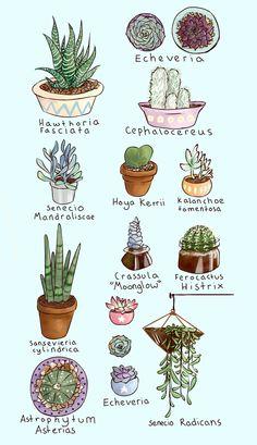 Super cactus and succulent garden indoor Ideas Types Of Succulents, Cacti And Succulents, Planting Succulents, Garden Plants, Indoor Plants, Planting Flowers, Cactus Types, Succulent Gardening, Sky Garden