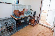 ペットが過ごす場所は、掃除がしやすい土間で出入りのしやすい間取り。