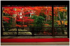 https://flic.kr/p/iu33xo | Fiery colors in Daiho-in temple's garden, Kyoto, Japan | I haven't sorted the 8000 shots of this year's momiji yet, so in the meantime here's one from last year :-)  More pictures of Japan, Kyoto (京都) and Daiho-in (大法院).