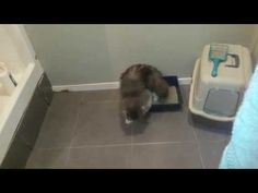 Harry using the litter tray... part 1