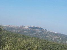 Vista de nuestro bello pueblo Sabiote desde la finca de mi amigo luis