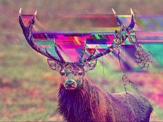 "#Glitch #Real #Edited #Moose  ""Glitch Tactics"" inpiration: Fall/Winter 2013-2014 Micro-trend"