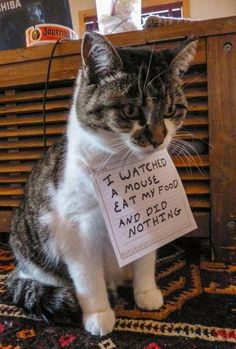 This has to be the cutest animal shaming pic. Funny too.