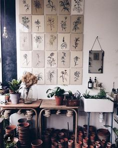 Lucy Auge 100 Flowers' @botanyshope5 photographed by Anna Jacobsen