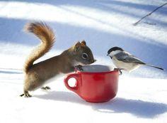 Совместное чаепитие.
