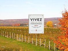 Vendanges 2017: beaucoup d'action sur la Route des Vins