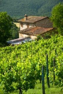 Beautiful Wineries, above all in Galicia, Spain www.MadamPaloozaEmporium.com www.facebook.com/MadamPalooza