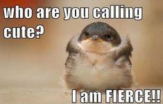 Stop Calling Me Cute