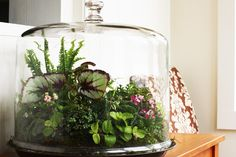 Go Green During Winter with Terrariums