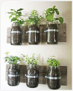 growing herbs in mason jars on wall