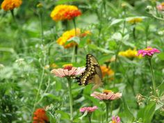 butterfly among flowers