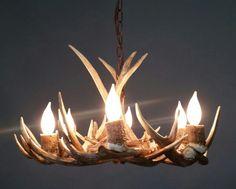 Whitetail chandelier. 6 lt.