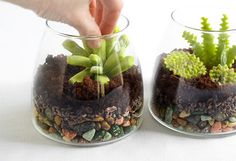 Snack on One of These Edible Terrariums