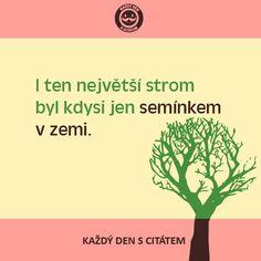 citaty-i-ten-nejvetsi-strom-byl-kdysi Jena