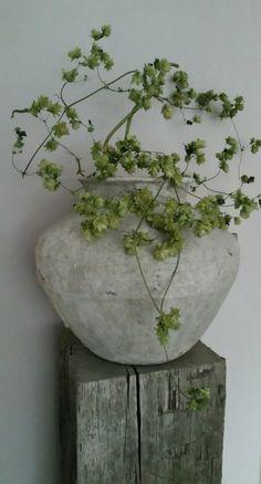 Kruik met hop op zuil - Health and wellness: What comes naturally Flower Centerpieces, Flower Arrangements, Terracota, Deco Floral, Flower Pots, Flowers, Mid Century Decor, French Decor, Wabi Sabi
