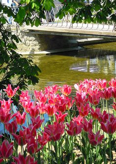 Tulip festival in Morges, on Lake Geneva