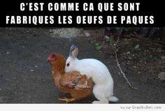 Quand le lapin de pâques rencontre une poule conciliante, ça donne les oeufs de pâques en chocolat !