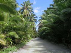 Coconut plantations almost overwhelm Air Force Road near the south end of West Island, Cocos (Keeling) Islands.