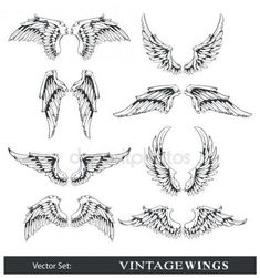 Ensemble de vecteur d'ailes — Illustration #7491515