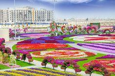 Jardines Que Me Gustan: El jardín milagroso
