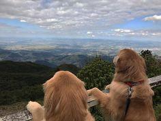 Estamos nas alturas hoje! ⛰ #bob #marley #goldenretriever #goldenretrievers #goldenretrieverbrasil #camposdojordao #camposdojordao2017 #picodoitapeva #saopaulo #invernopetbamboo #dogstyle #dogs #petstagram #instapet #instagrammers