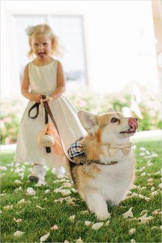 flower girl and ring bearer corgi #dogsinwedding