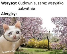 Polish Memes, Everything And Nothing, Titanic, Book Worms, Funny Memes, I Laughed, Humor, Anime, Instagram