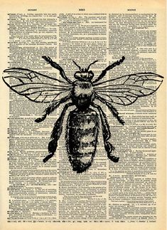 Bee Print - Vintage Dictionary Art Print - Natural History Insect Art - Upcycled Altered Art Book - Rustic Home Decor Print - Art✍️ - Art Vintage, Vintage Art Prints, Etsy Vintage, Vintage Decor, Vintage Library, Vintage Books, Art Altéré, Natural Form Art, Natural Forms Gcse
