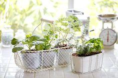 Alimentos para plantar