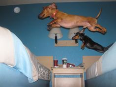 Flying doxies