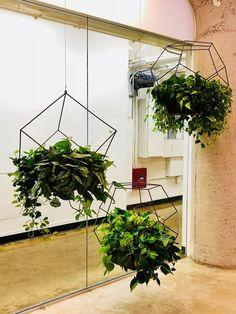 STEEL HANGING PLANT HOLDER