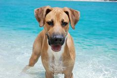 Donate $12 to Island Dog and enter to win a trip to warm & sunny Puerto Rico!