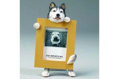 Picture Frame Siberian Husky