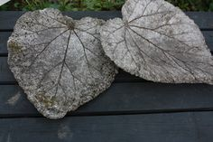 concrete leaves