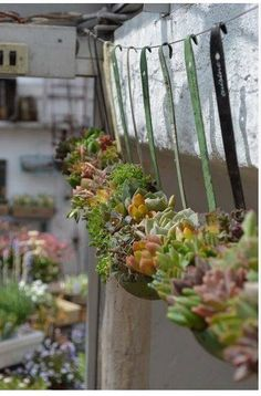 Indoor Gardening Vintage Garden Decor Ideas: Antique Soup Ladle Succulent Planter Display - The modern life is changing our life but cannot replace old values. Looking for vintage garden decor designs Succulent Gardening, Cacti And Succulents, Planting Succulents, Container Gardening, Planting Flowers, Organic Gardening, Gardening Tips, Succulent Ideas, Indoor Gardening