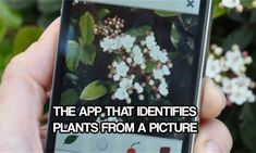 The App That Identifies Plants From A Picture - I downloaded this app and got great results. How many times have you seen a plant or a flower and are unsure of what it is?