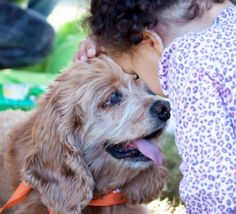 payton is a senior blind cocker spaniel who was pulled from a municipal shelter where he would not have had a chance! He is very smart. In ho foster home he learned quickly to follow the other dogs and use the doggie door. He is very loving and is...