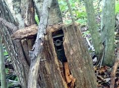 Tips To Hide Trail Cams We are prepared with several methods to hide trail cams this season, while at the same time offering the opportunity to catch a thief;CAMS CAMS or cams may refer to: Bow Hunting Deer, Quail Hunting, Deer Hunting Blinds, Coyote Hunting, Pheasant Hunting, Turkey Hunting, Archery Hunting, Hunting Dogs, Hunting Stuff