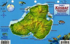 Kosrae Federated States of Micronesia Creatures Identification Guide - Fish Card