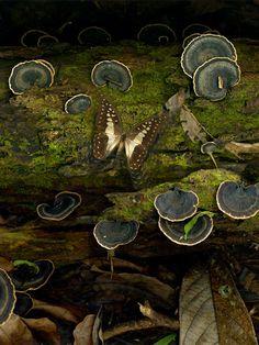 Moth with fungi
